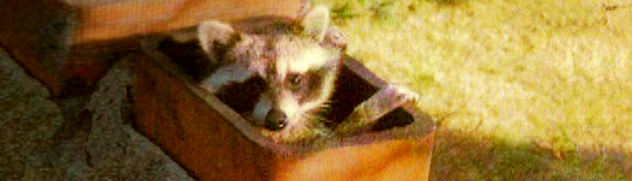 Keep raccoons out of your chimney with a chimney cap