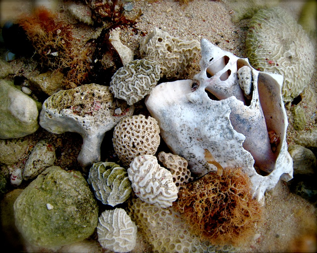 Shells and Coral make for a beach-themed decoration