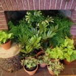 greenery in the fireplace