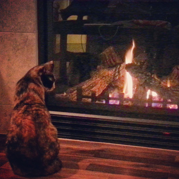 Zelda contemplates the First Fire of the Season.
