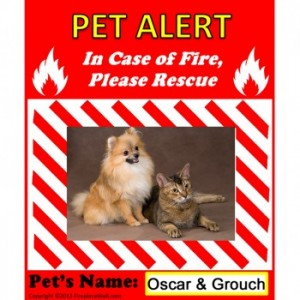 Window Pet Alert with Your Pet's Photo and Name