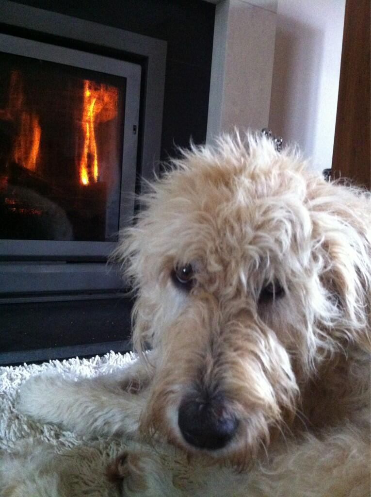 Tilly gives her approval to this First Fire of the Season in a fireplace just 20 minutes from Stonehenge in the UK.