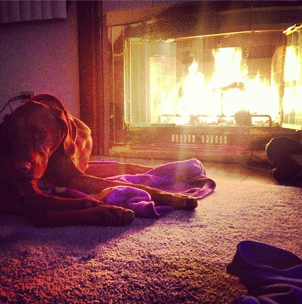Tucker Enjoys the First Fire of the Season...And Every Fire of the Season