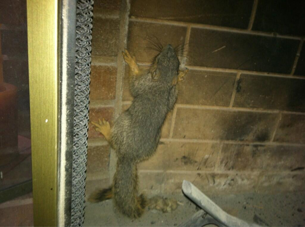 Squirrel in Fireplace