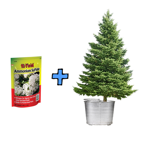 Make your Christmas tree fire retardant.