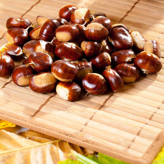 Selecting Chestnuts to Roast in the Fireplace