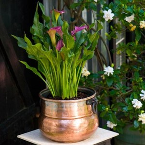 Repurpose the leprechaun pot of cold to an indoor or outdoor planter.