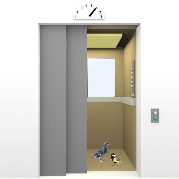 Bird Stuck in Elevator ? Follow instructions for Bird Elevator.