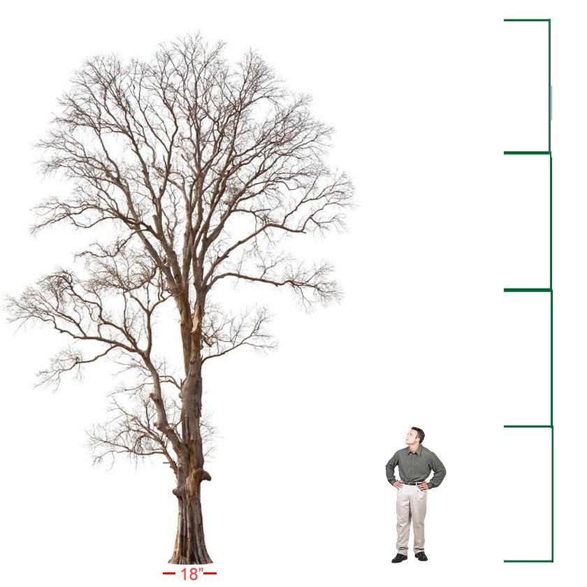 Half-cord tree How much Firewood per tree