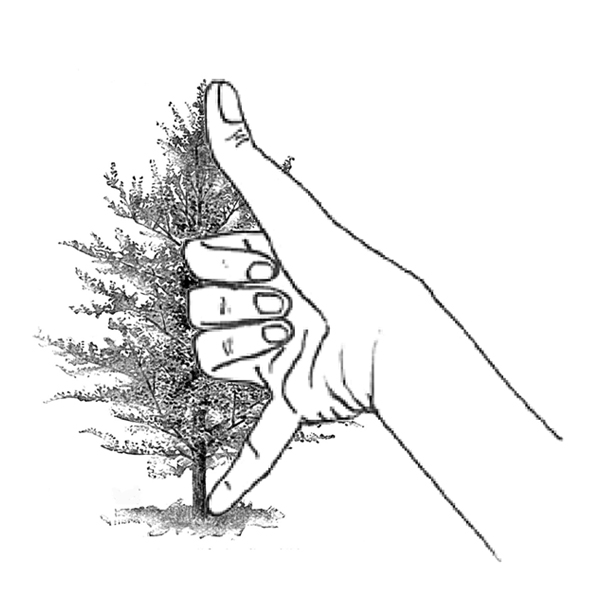 Measure height of tree using folk-knowledge