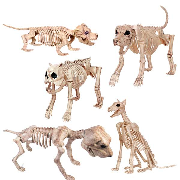 dog skeletons