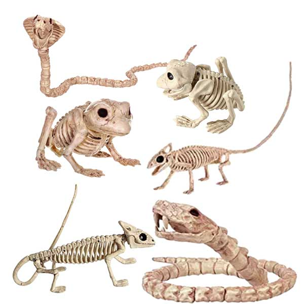 skeletons of snakes, lizards, toads, frogs, and geckos