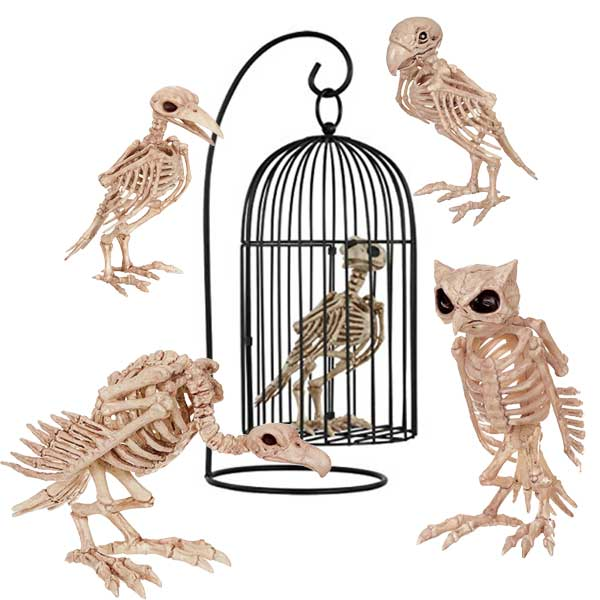bird skeletons